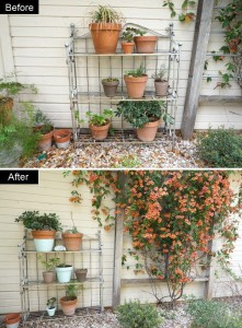 Potted-plants-get-a-makeover